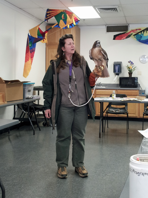 Ms. Paula introduces the club to a regal red-tailed hawk.